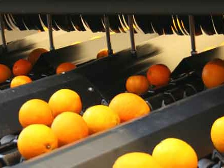 Moodbar_EasySort_sinaasappels